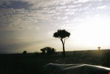 mombasa colori alba africana
