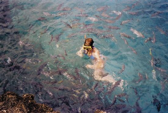 Foto accerchiata da pesci a cartagena 550x369 autore for Pesci online