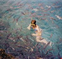 accerchiata da pesci