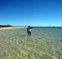 perth la spiaggia di monkey mia