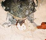 kuala lumpur tartaruga