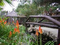 Il giardino botanico Quinta das Palmeiras