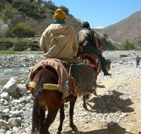 19523 marrakech a dorso di mulo