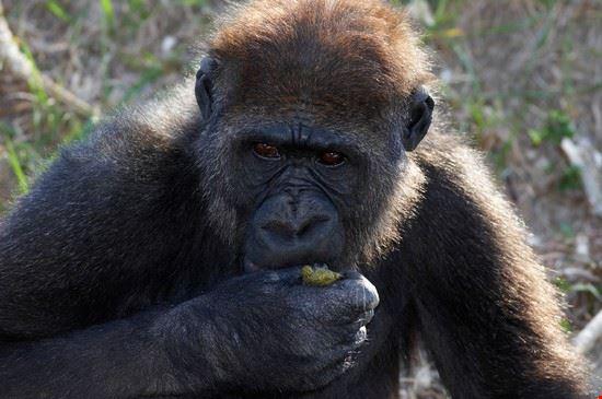 19539 miami una scimmia al giardino zoologico