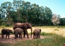 safaris1