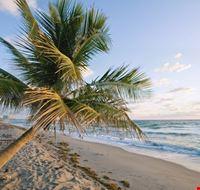 19969 dania palm on the beach