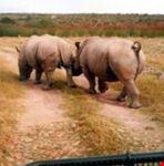 safaris3