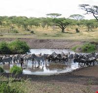 20143 arusha serengeti