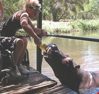 20169 johannesburg wheelchair traveller misha with jessica the hippo