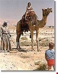Camel Rides with the Bedouin