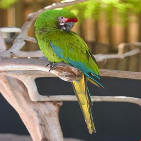 Naples Zoo at Caribbean Gardens