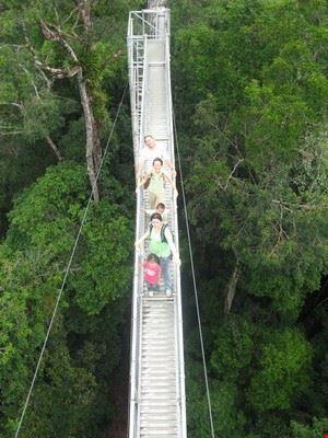 Canopy Walk, Temburong National Park, Brunei