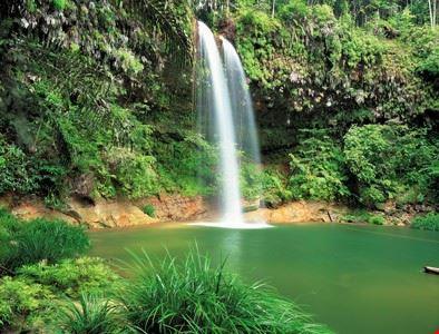 Lambir Hill National Park, Miri, Sarawak, Malaysia Borneo