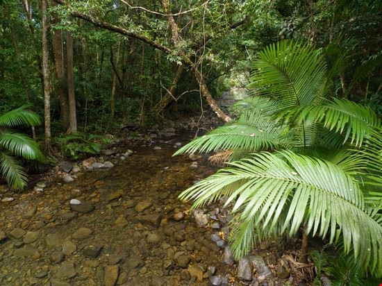 20620 daintree daintree rainforest