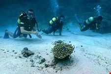 diving rodrigues