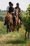 the vineyard on horseback