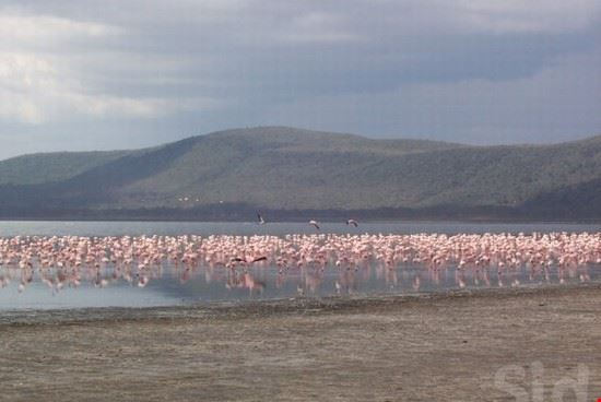 Safari in Lake Nakuru