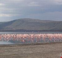 Safari in Lake Nakuru