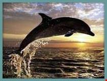 zanzibar dolphin tour in zanzibar