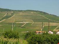 Tokaj Vineyard - Wine Tour Hungary