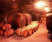 Tokaj Wine Cellar - Wine Tour Hungary