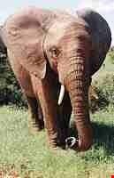 Addo National Park Safari