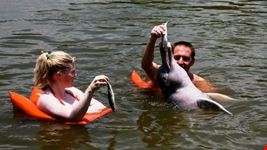 manaus amazon dolphin