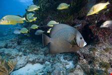 Diving Key Largo