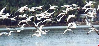 KADALUNDI BIRD SANTUARY MALAPPURAM- KERALA- INDIA