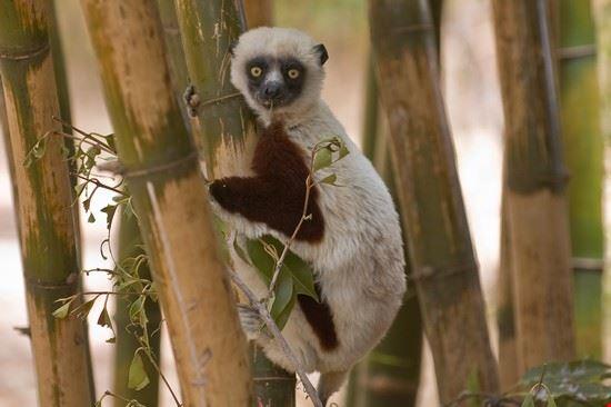 antananarivo tsimbazaza zoo