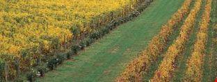 melbourne wine tour around yarra valley