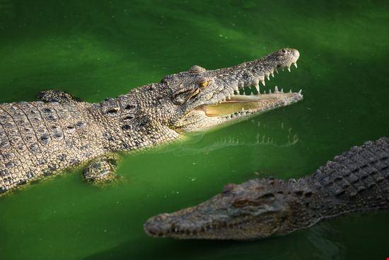 Reptile World Zoo
