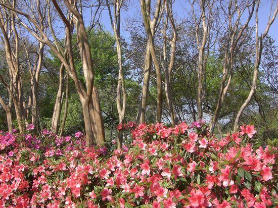 Hotels Near Dallas Botanical Gardens