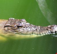 Crocodile habitat