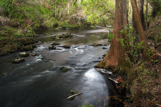 The Hillsborough River State Park