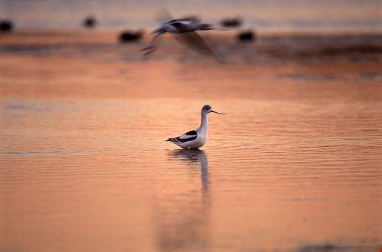 23120 bolsa chica ecological reserve huntington beach