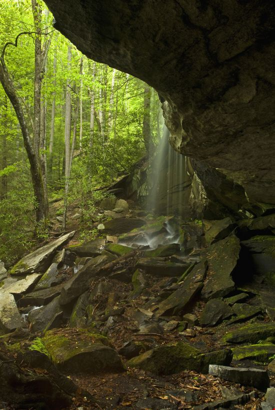 The Pisgah National Forest