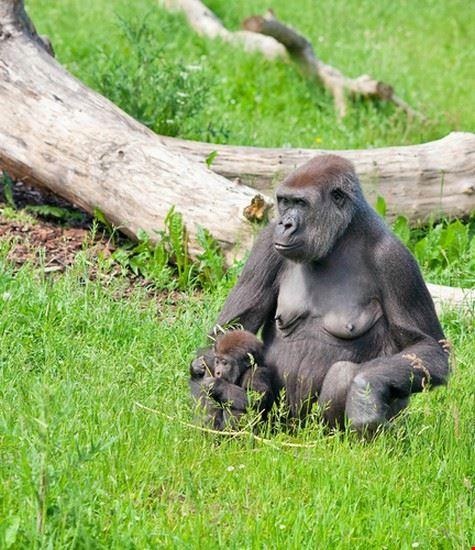 23547 kampala mountain gorilla safari