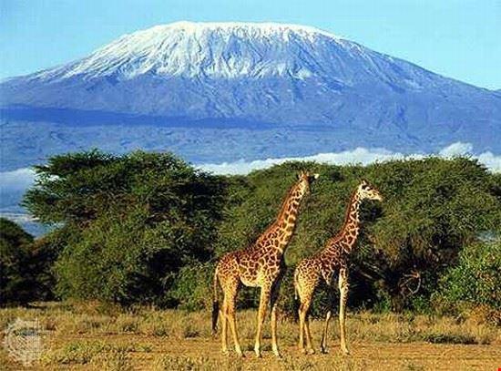 arusha kilimanjaro trekking expeditions