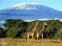 arusha kilimanjaro trekking expeditions