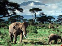 mount kilimanjaro in tanzania arusha