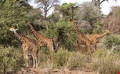 African safaris, Tanzania safaris