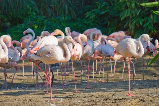 hannover flamingos im hannover zoo