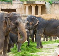23767 hannover zoo hannover