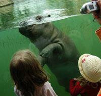 23802 berlin nilpferd im zoo berlin