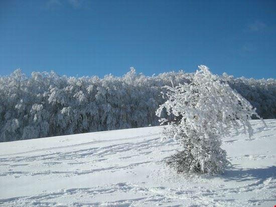 Nella Foresta in inverno