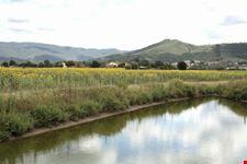 Mucchia torrent near Cortona