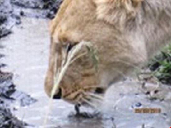 Safari Masai Mara marzo 2010