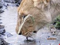 safari masai mara marzo 2010 mombasa