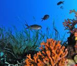 diving sardegna